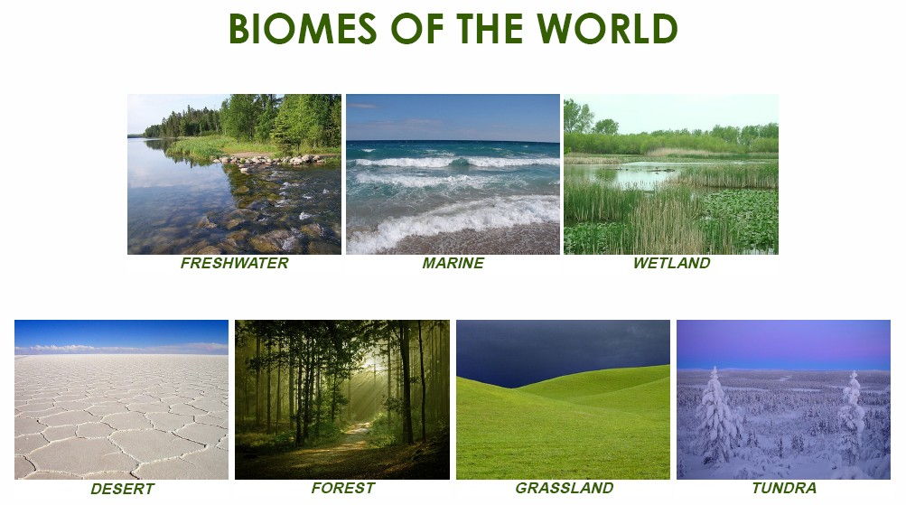 Biomes of the World Picture Activity Cards – Biomes of the World Worksheet